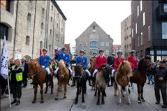 Icelandic horses in the city of Copenhagen