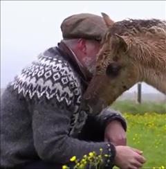 FEI TV – Icelandic Horses part 2