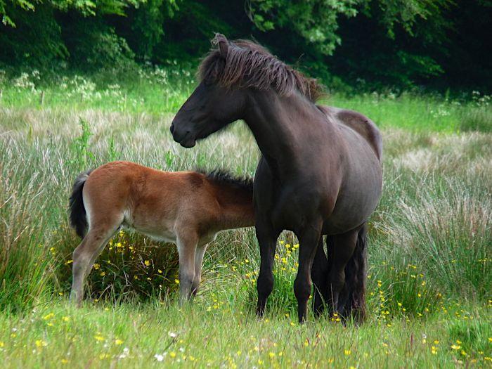 Breeding – A single set of standards