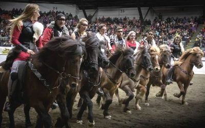 Horses of Iceland – news and events