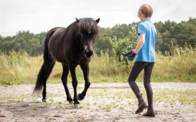 Live reading 'The Little Viking Horse'