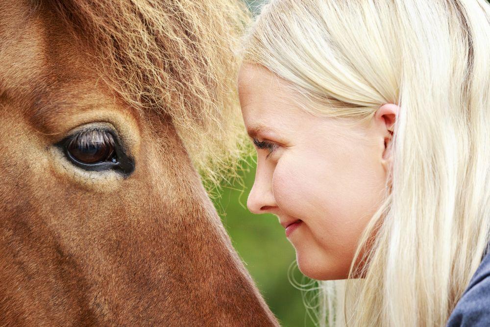 Celebrating the Icelandic horse all over the world!