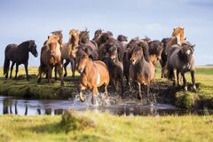 Day of the Icelandic horse 2020