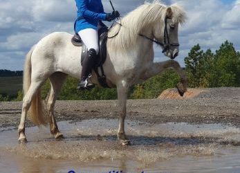 Free online seminar for young competition riders