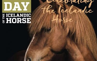 International Day of the Icelandic Horse on TikTok