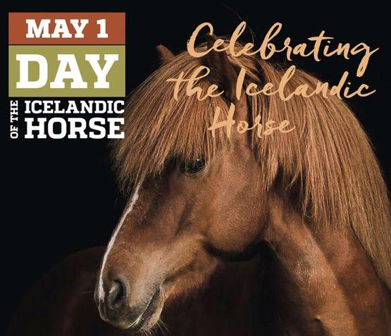 International Day of the Icelandic Horse on TikTok